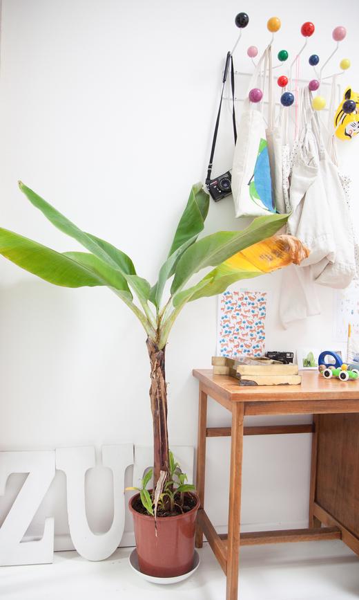 Entrée Patère Eames Palmier Plantes Maison Nantes Delphine Imbert
