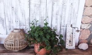Plante Formentera – The Socialite Family