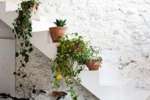 Plantes – Laia Aguilar