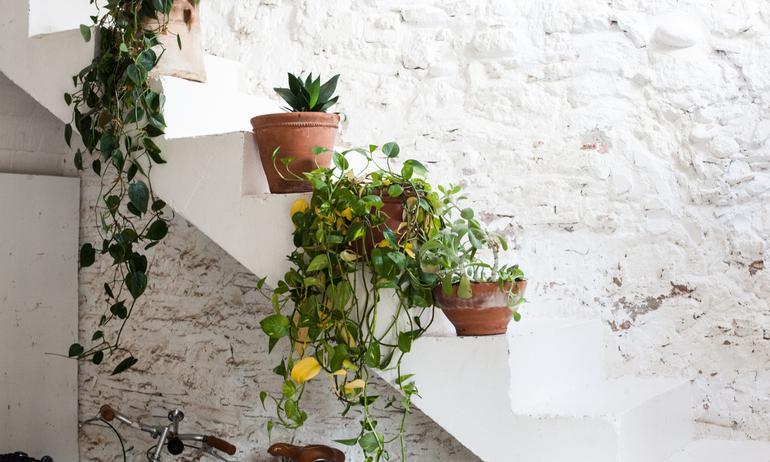 Plantes vertes Escaliers Extérieur Maison Espagne Laia Aguilar