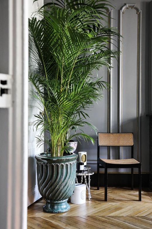 Salon Plante Fauteuil Cannage Appartement Paris David Chaplain et Alexandre Roussard