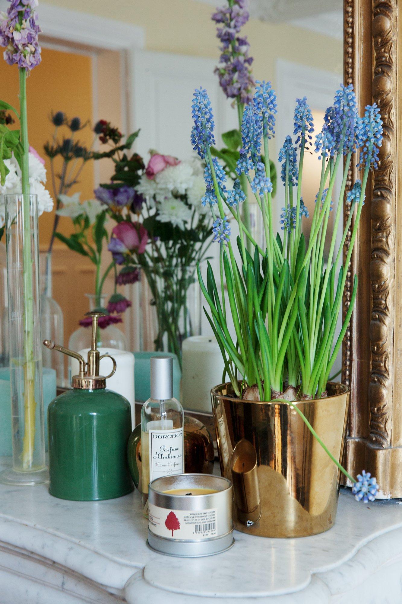 Plantes Salon Styliste Designer Jonathan Liang Paris