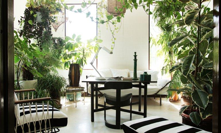 Bureau Plantes vertes Appartement Marseille Fondatrice Honoré Décoration Annick Lestrohant