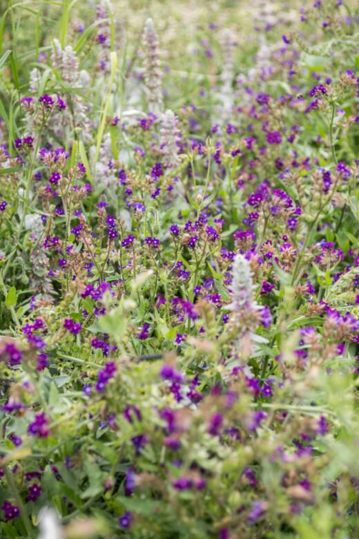 Fleurs mauves dans la ferme florale Plein air à Paris