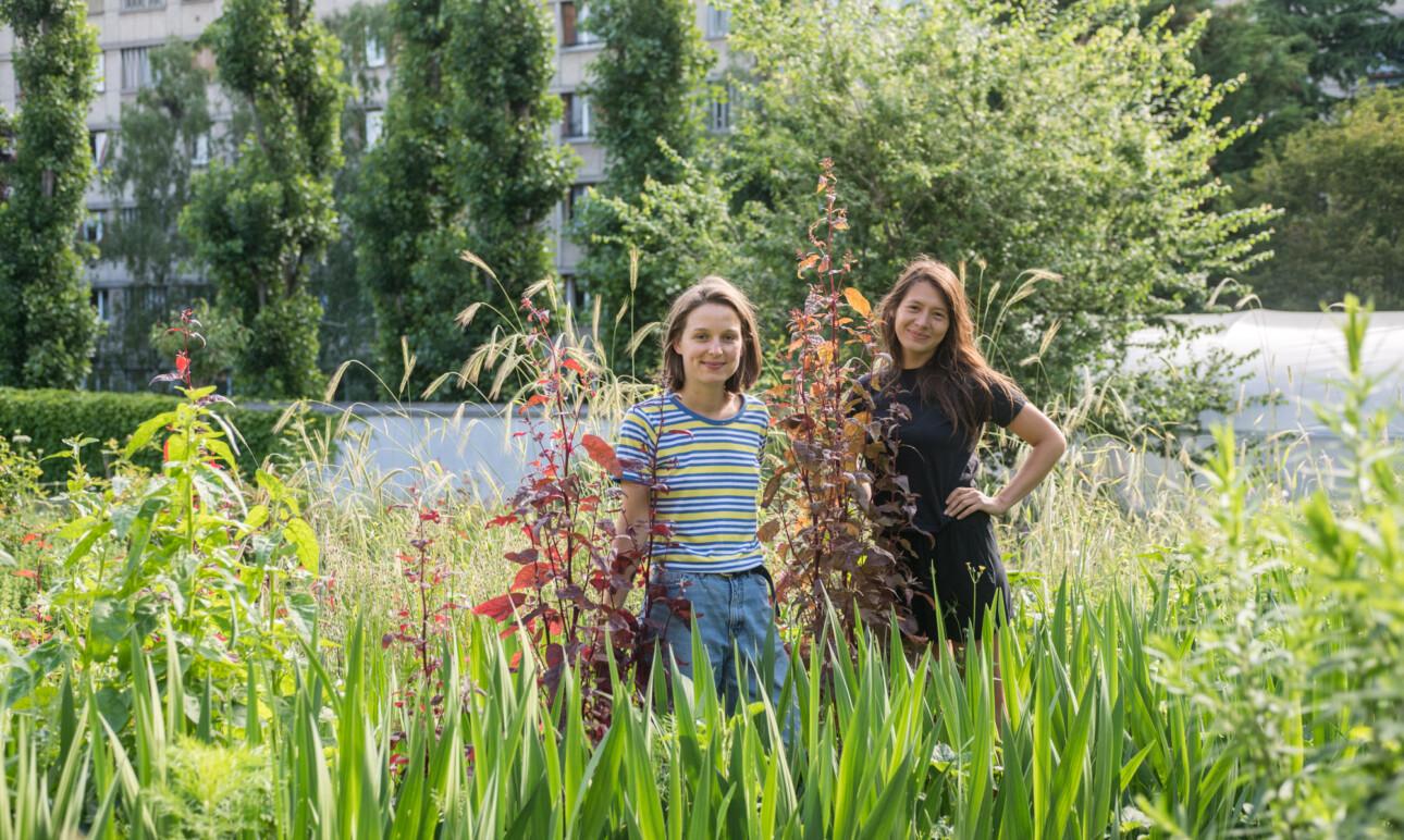 Plein Air, a Biodynamic Flower Farm